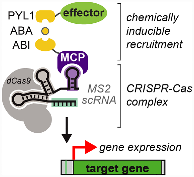 CRISPR-Cas-Mediated Chemical Control of Transcriptional Dynamics in Yeast.